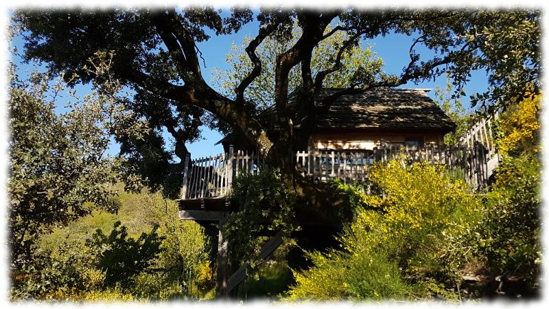 cabane-arbre-est tree house