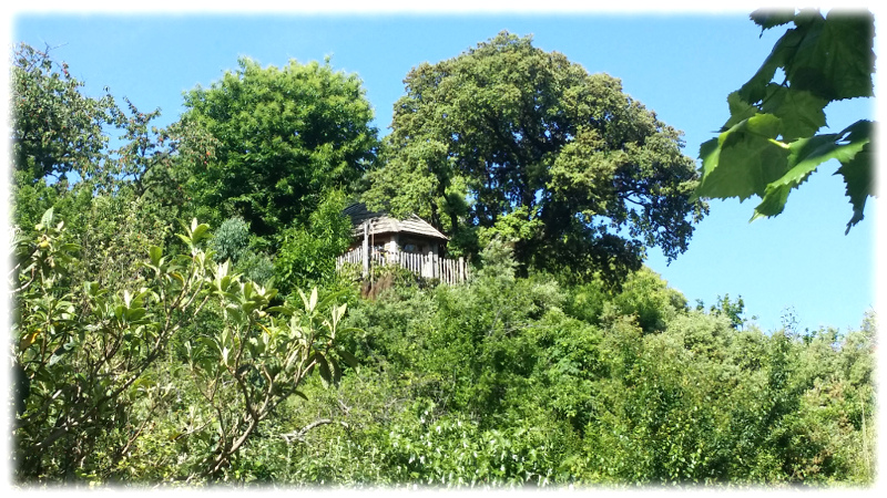 cabane-arbres-vue-loin tree house