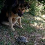 Betzen et la tortue